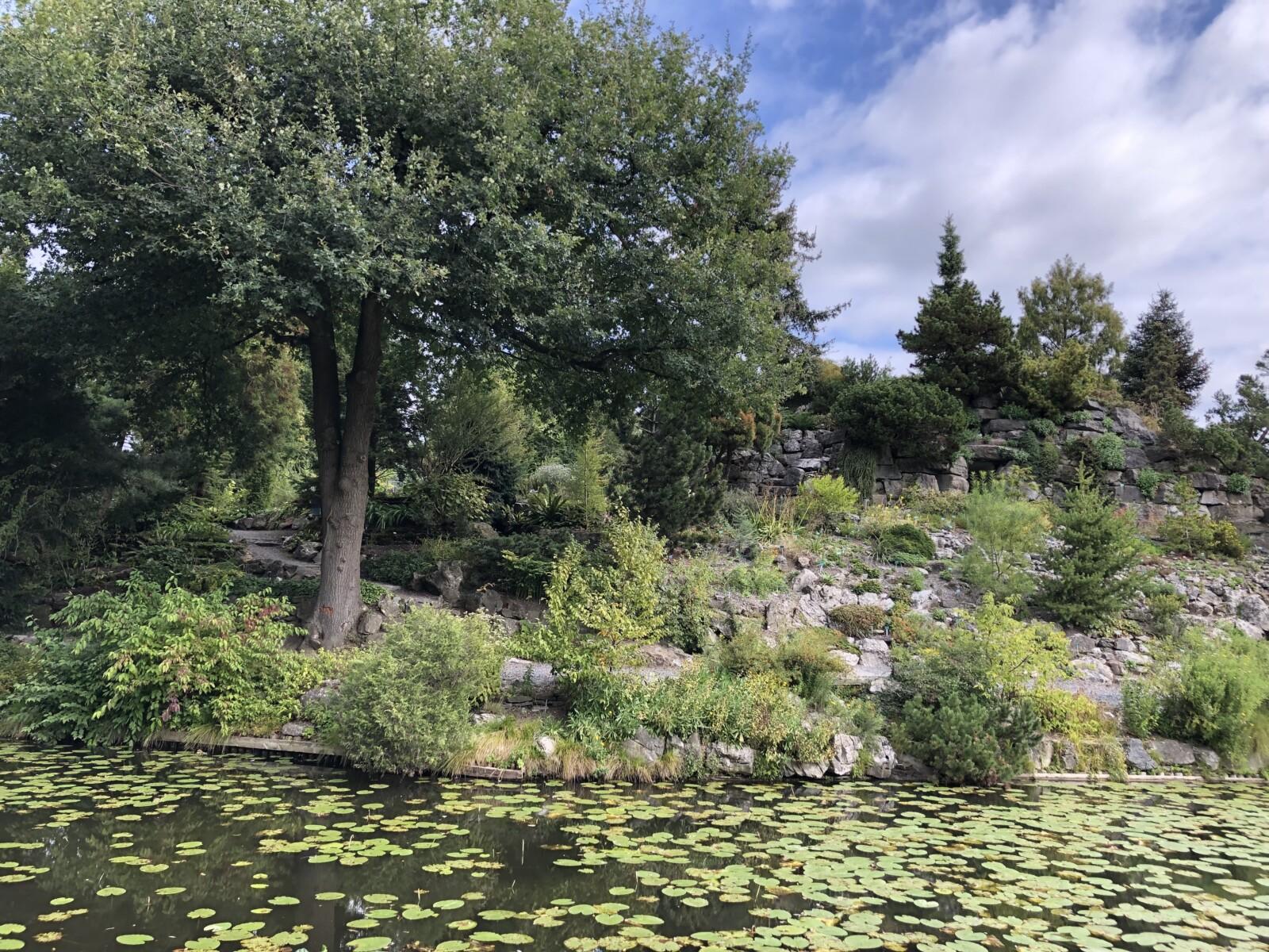 Stekjesdag bij Botanische Tuinen
