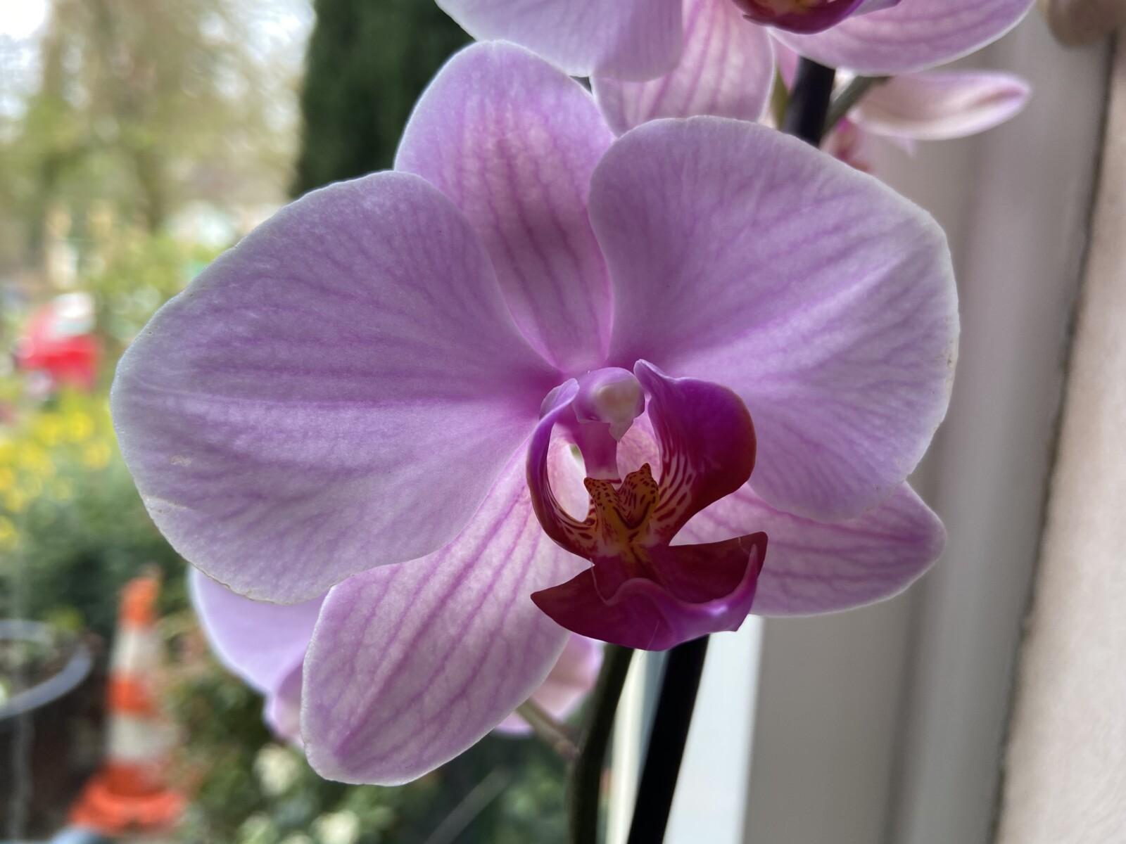 Orchideeën bij mijn vader