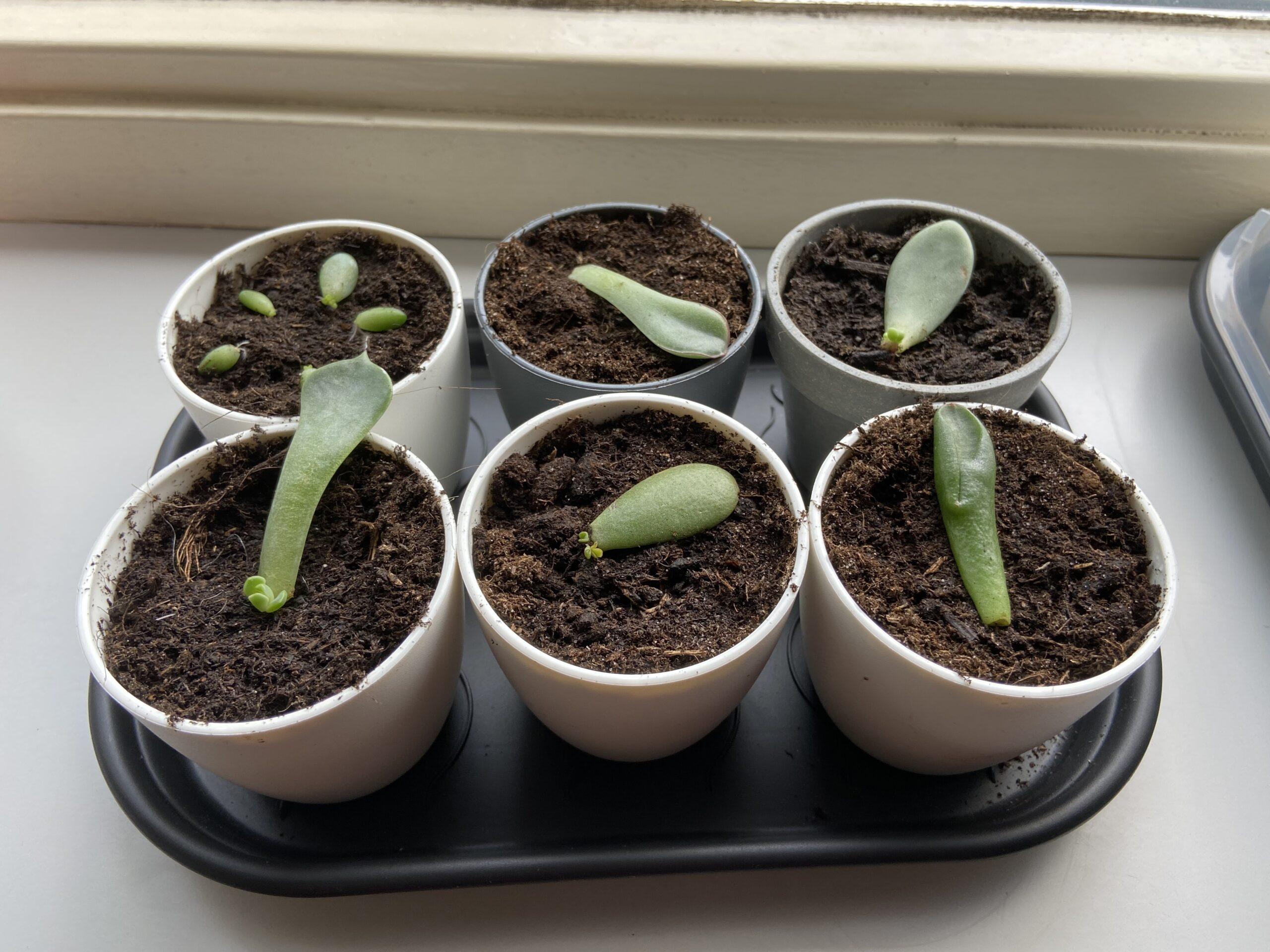 vetplantjes kweekbak